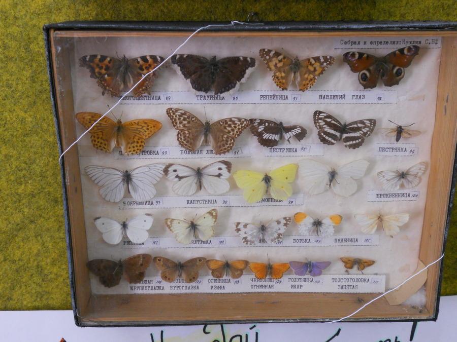 Коллекция бабочек (22.12.2016)